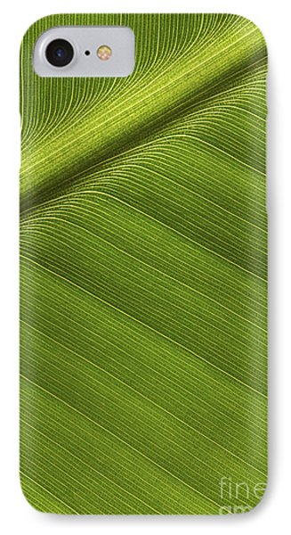 Banana Leaf Showing Rib Netherlands IPhone Case by Ronald Pol