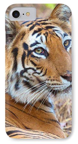 Bandhavgarh Tigeress IPhone Case by David Beebe