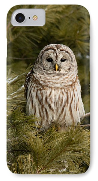 Barred Owl In A Pine Tree. IPhone Case by Michel Soucy