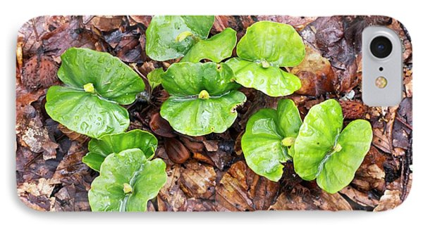 Beech (fagus Sylvatica) Tree Seedlings IPhone Case