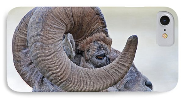 IPhone Case featuring the photograph Bighorn Mountain Sheep 1 by Dennis Cox WorldViews