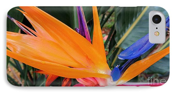 Bird Of Paradise IPhone Case by Kristine Merc
