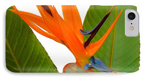 Bird Of Paradise IPhone Case by Peg Urban