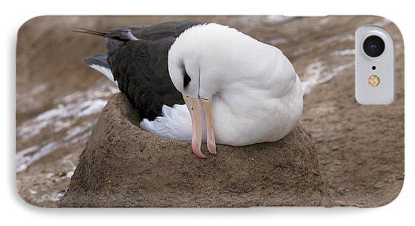 Black-browed Albatross Nesting IPhone Case