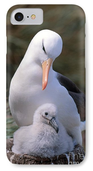 Black-browed Albatross With Chick IPhone Case