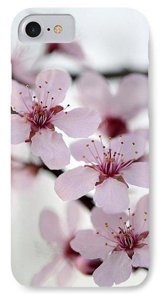 Black Cherry Plum (prunus Cerasifera) IPhone Case by Maria Mosolova