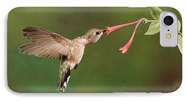 Black-chinned Hummingbird Phone Case by Scott Linstead