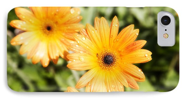 IPhone Case featuring the photograph Black Eyed Susan by Hugh Smith