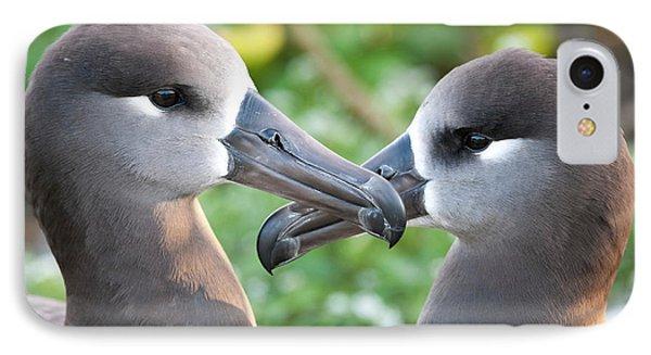 Black-footed Albatross (phoebastria IPhone Case by Daisy Gilardini