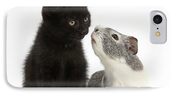 Black Kitten And Guinea Pig IPhone Case by Mark Taylor