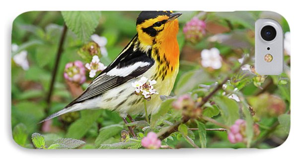 Blackburnian Warbler (dendroica Fusca IPhone Case by Larry Ditto