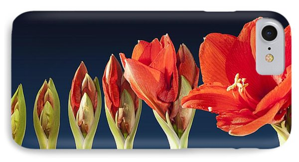 Blossoming Amaryllis Flower IPhone Case