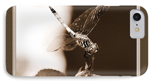 Blue Dasher Dragonfly IPhone Case by Charles Feagans