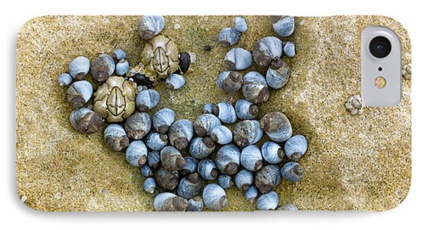 Blue Periwinkles On A Rocky Shore IPhone Case