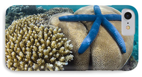 Blue Sea Star On Coral Reef Fiji IPhone Case by Pete Oxford