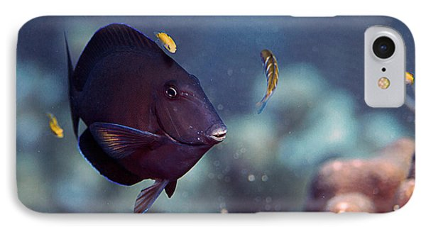 Blue Tang IPhone Case by JT Lewis