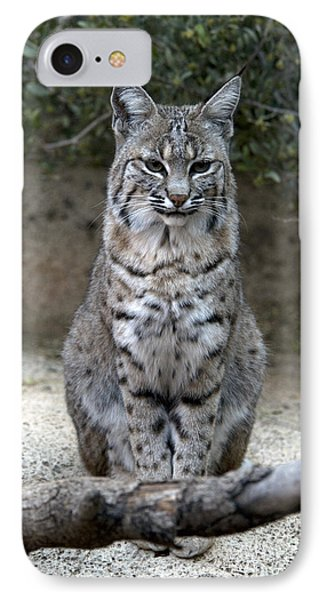 Bobcat IPhone Case by Mark Newman