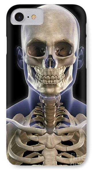 Bones Of The Head And Upper Thorax IPhone Case