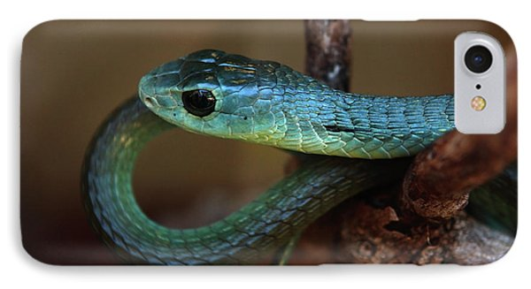 Boomslang IPhone Case by Aidan Moran