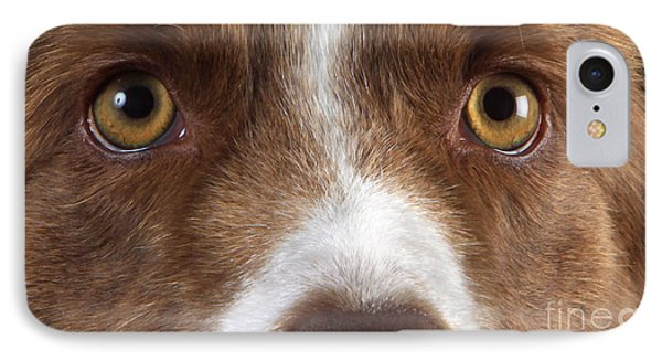 Border Collie Eyes IPhone Case by Christine Steimer