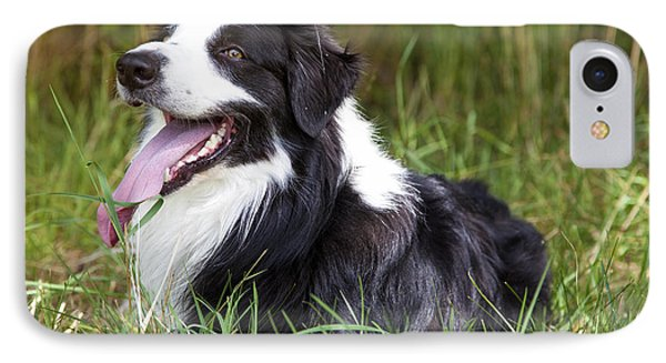 Border Collie In The Nature Phone Case by Regina Koch