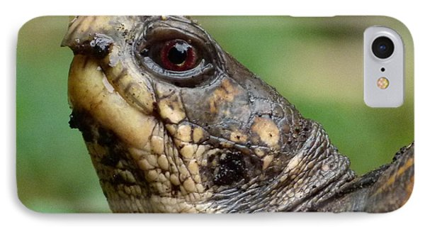 Box Turtle IPhone Case by Jane Ford