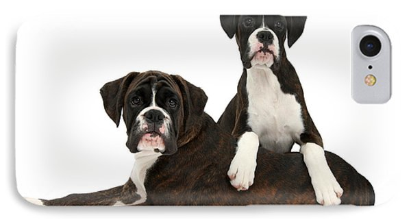 Boxer Pups IPhone Case by Mark Taylor