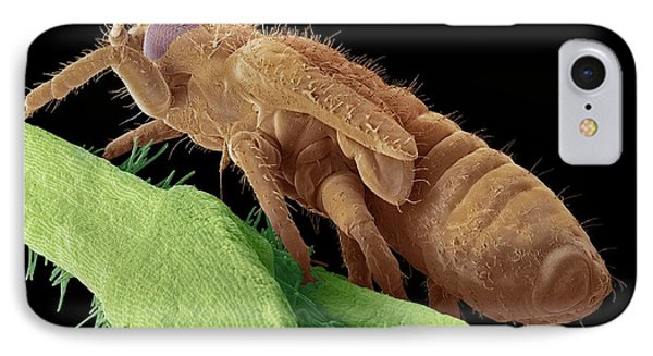Boxwood Psyllid Larva IPhone Case by Steve Gschmeissner