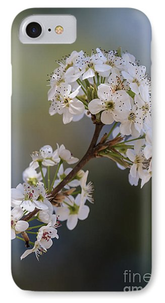 Bradford Blossoms II IPhone Case