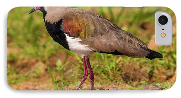 Brazil A Southern Lapwing (vanellus IPhone Case