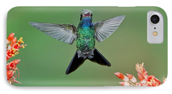 Broad-billed Hummingbird Phone Case by Anthony Mercieca