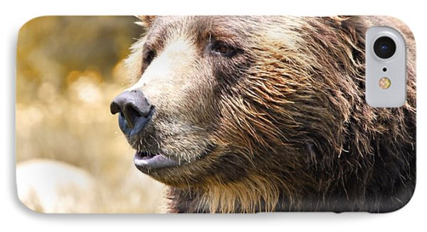 Brown Bear Portrait In Autumn IPhone Case
