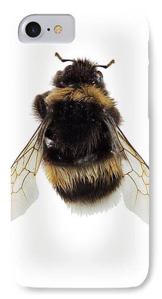 Buff-tailed Bumblebee IPhone Case by F. Martinez Clavel
