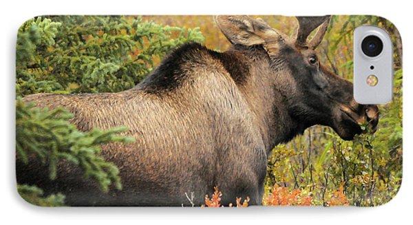 Bull Moose, Feeding, Denali National IPhone Case by Michel Hersen