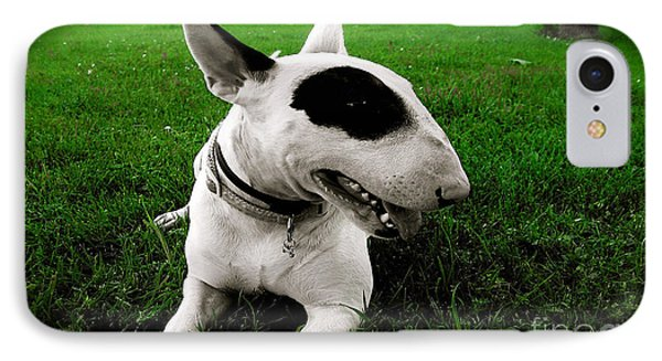 Bull Terrier  IPhone Case by Marvin Blaine