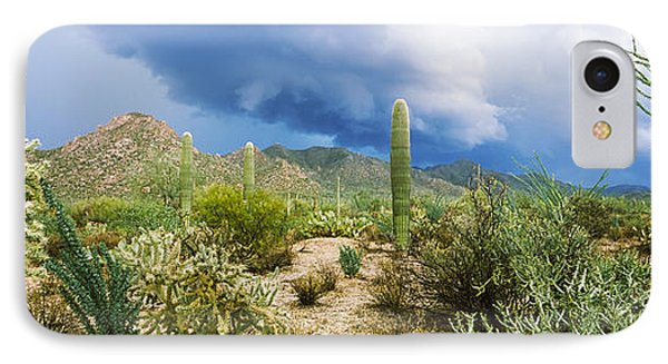 Cacti Growing At Saguaro National Park IPhone Case by Panoramic Images