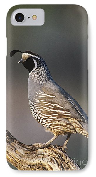 California Quail IPhone Case by William H. Mullins