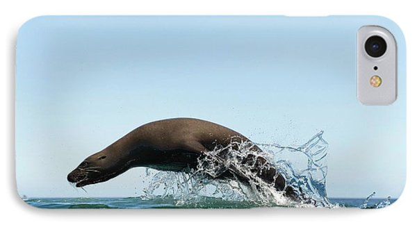 California Sea Lion IPhone Case by Christopher Swann