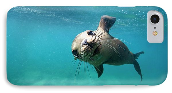 California Sea Lion Pup IPhone Case by Christopher Swann