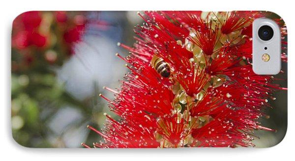 Callistemon Citrinus - Crimson Bottlebrush Phone Case by Sharon Mau