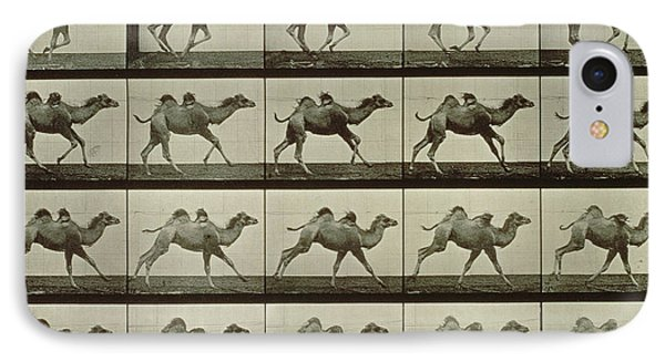 Camel IPhone Case by Eadweard Muybridge