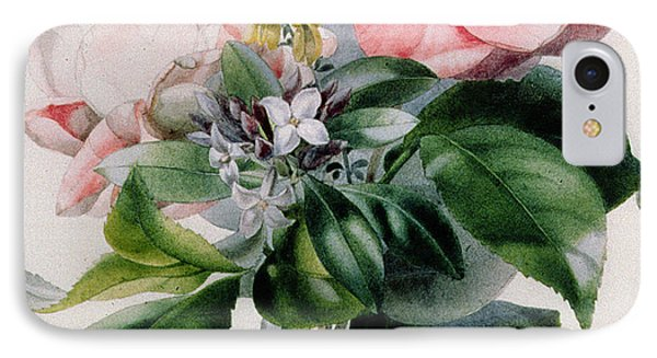 Camellia And Broom IPhone Case