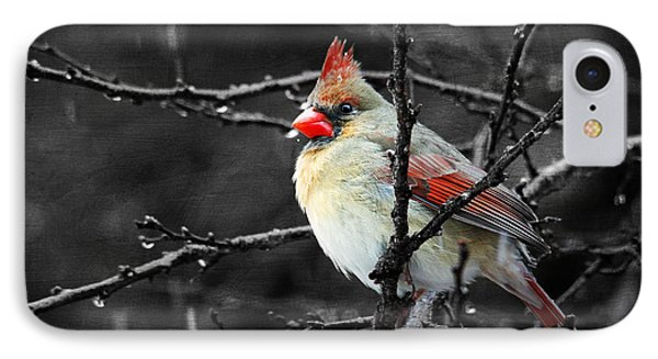 IPhone Case featuring the photograph Cardinal On A Rainy Day by Trina  Ansel