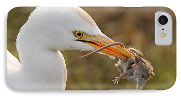 Cattle Egret IPhone Case
