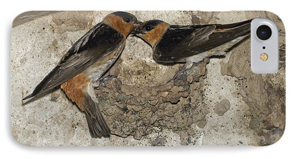 Cave Swallows IPhone Case