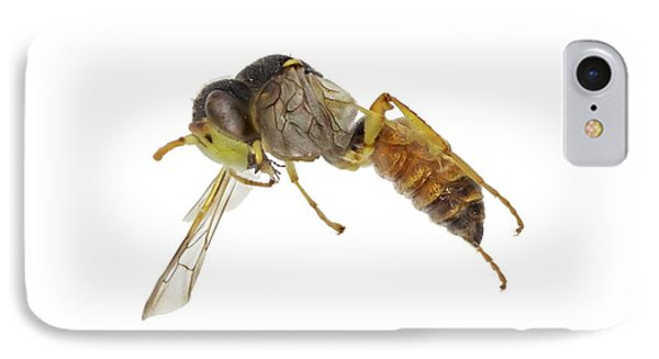 Cerceris Flaviventris Wasp IPhone Case by F. Martinez Clavel