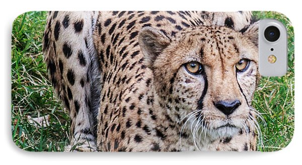IPhone Case featuring the photograph Cheetah by Cathy Donohoue