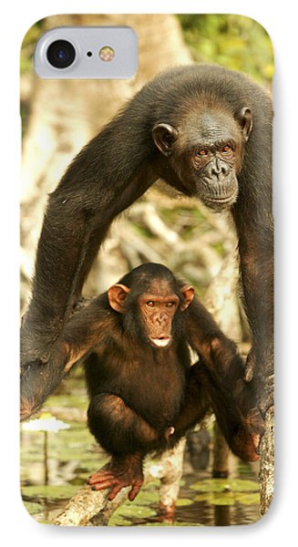 Chimpanzee Adult With Young IPhone Case by Jean-Michel Labat