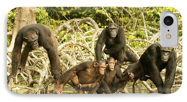 Chimpanzees On Mangroves IPhone Case by Jean-Michel Labat