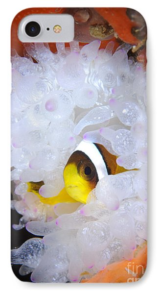 Clarks Anemonefish In White Anemone IPhone Case by Steve Jones